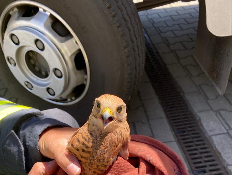 Die LG Langern rette diesen Falken aus der Abgasanlage einer Verdichter-Turbine. Foto: Feuerwehr Werne
