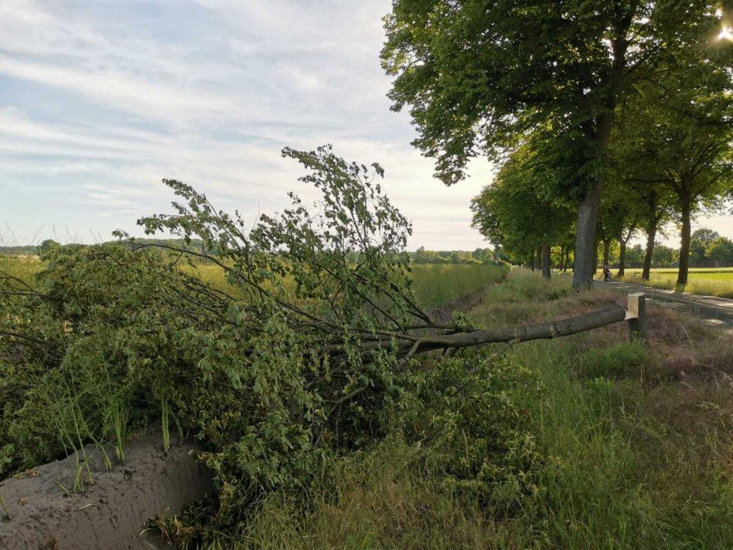 Insgesamt zwei Bäume wurden Pfngsten an der Wesseler Straße umgesägt, zudem ein Temp 70-Schild umgerissen. Foto: Wagner