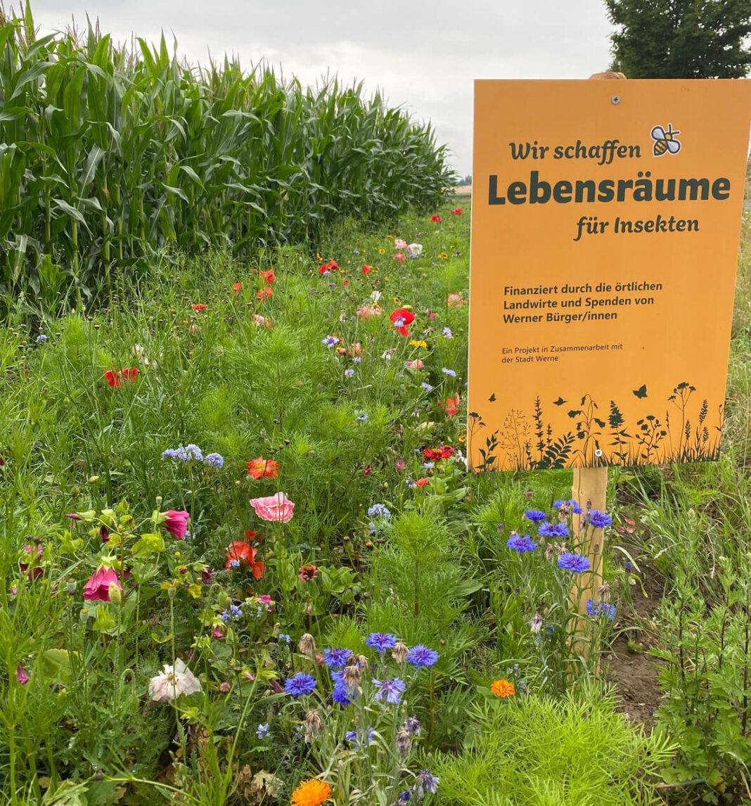 Am Kiwitzheidweg kurz vor der Autobahnbrücke steht der Streifen in voller Blüte. Foto: Zurhorst