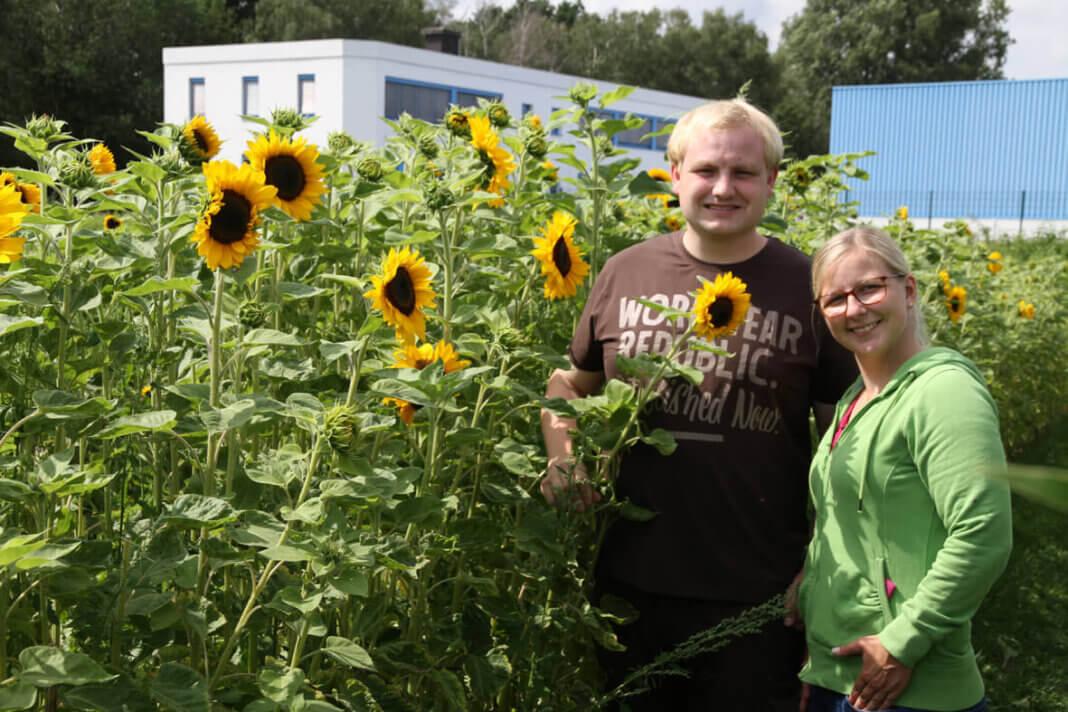 Johanna und Ferdinand Schulze Froning bietet Sonnenblumen, Dahlien und Gladiolen zum Selberpflücken. Foto: Wagner