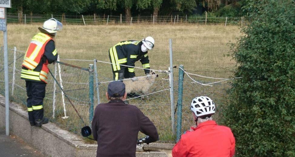 Die Feuerwehr befreite das Lamm aus seiner prekären Lage am Stromzaun. Foto: Feuerwehr Werne