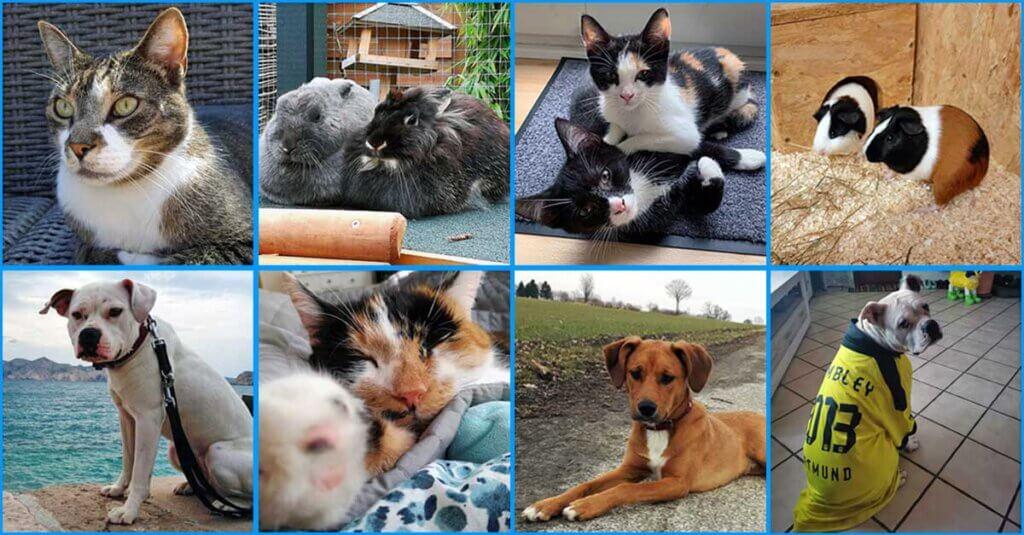 Ehemalige Tiere auf der Suche in ihrem neuen Zuhause. Fotos: privat