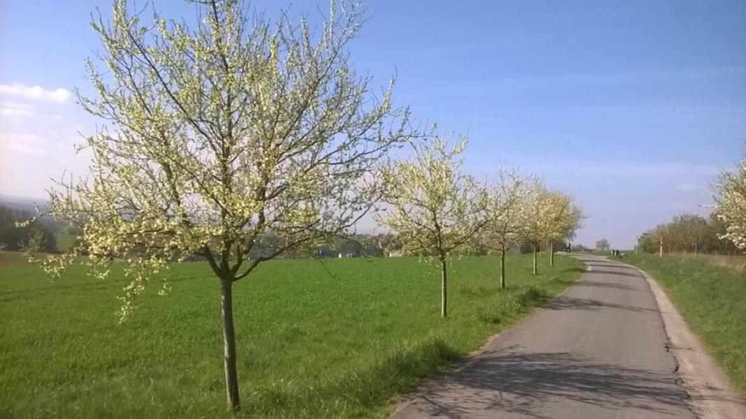 Das Ziel: blühende Obstbaumwiesen im Frühjahr. Foto: Kreis Unna