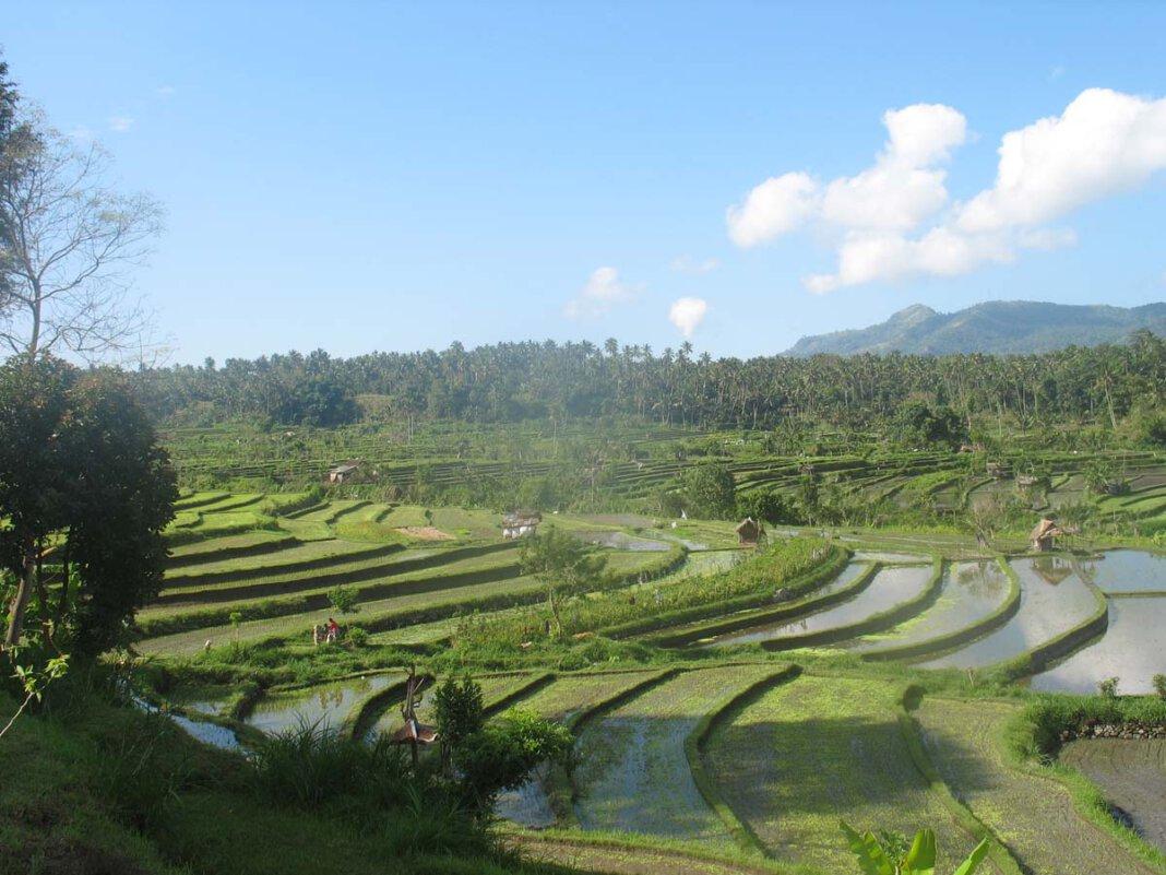 Auf einer Reisplantage, wie hier auf Bali, wird unter schweren Bedingungen angebaut. Foto: Börste