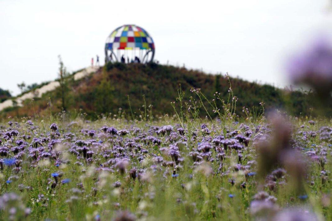 Im Schatten der Kuppel breitet sich ein bunter Teppich aus. Foto: M. Woesmann / Stadt Selm
