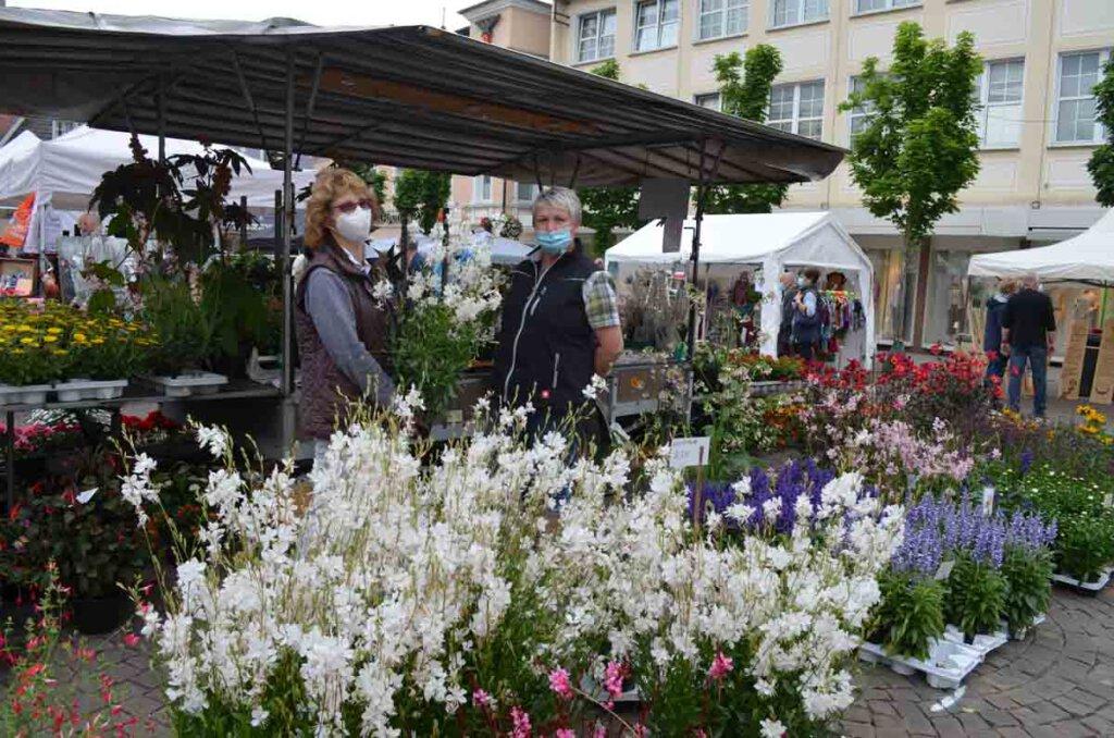 Farbenfrohe Pflanzen begrüßten die Gäste auf dem Marktplatz. Foto: Prokofev