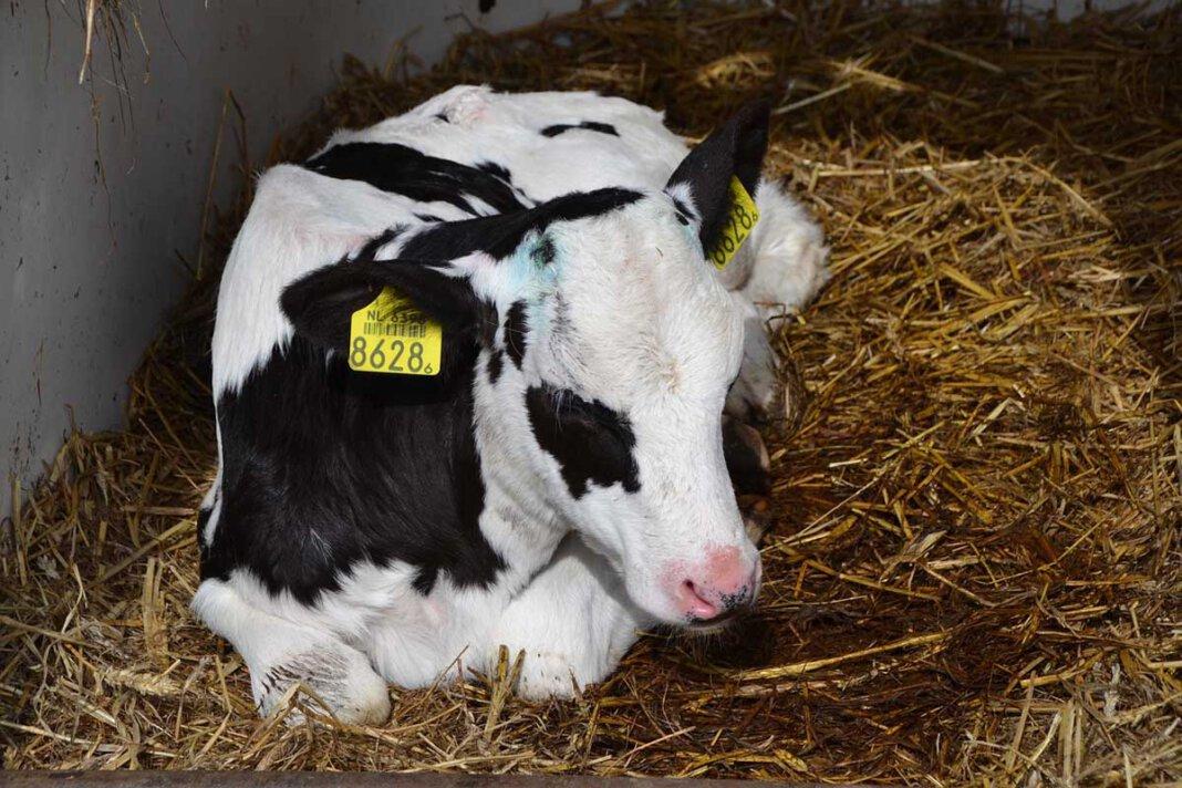 Die Fleischerei Mecke GmbH hat auf die Vorwürfe mit einer Stellungnahme reagiert. Symbolfoto: pixabay