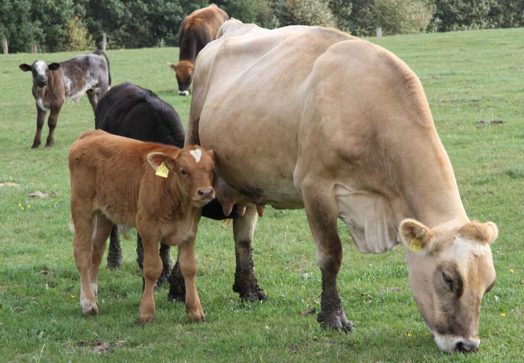 Der Kreis Unna hat am Freitagabend Mitarbeitern einer Viehsammelstelle den weiteren Umgang mit Tieren untersagt. Symbolbild: Wagner