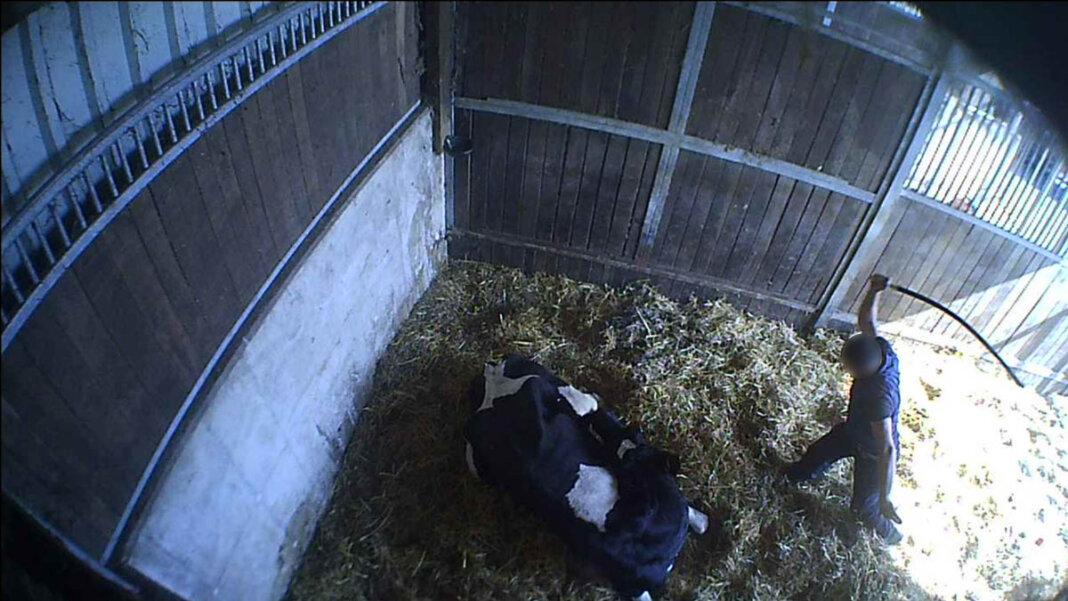 Ein Betrieb in Werne ist nach Ausstrahlung eines Berichts des ARD-Magazins Fakt offensichtlich in den Mittelpunkt staatsanwaltlicher Ermittlungen in Sachen Tierquälerei gerückt. Foto: Soko Tierschutz