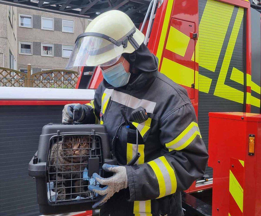Die Feuerwehr befreite die Katze aus einer misslichen Situation. Das Haustier stecke in einer Dachrinne fest. Foto: Feuerwehr Werne