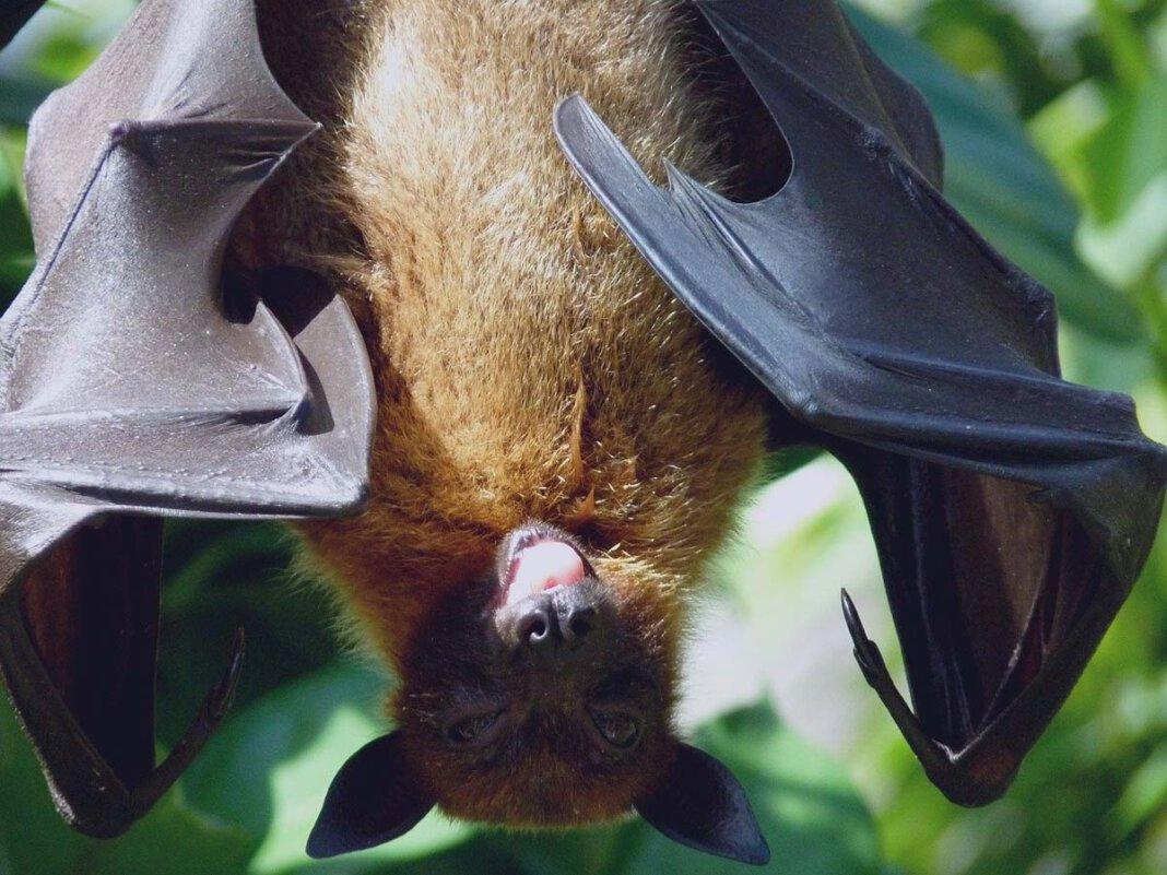 """Bei einer Exkursion mit der Awo-Kita """"Biberburg"""" beobachten die Teilnehmenden Fledermäuse. Symbolfoto: pixabay"""