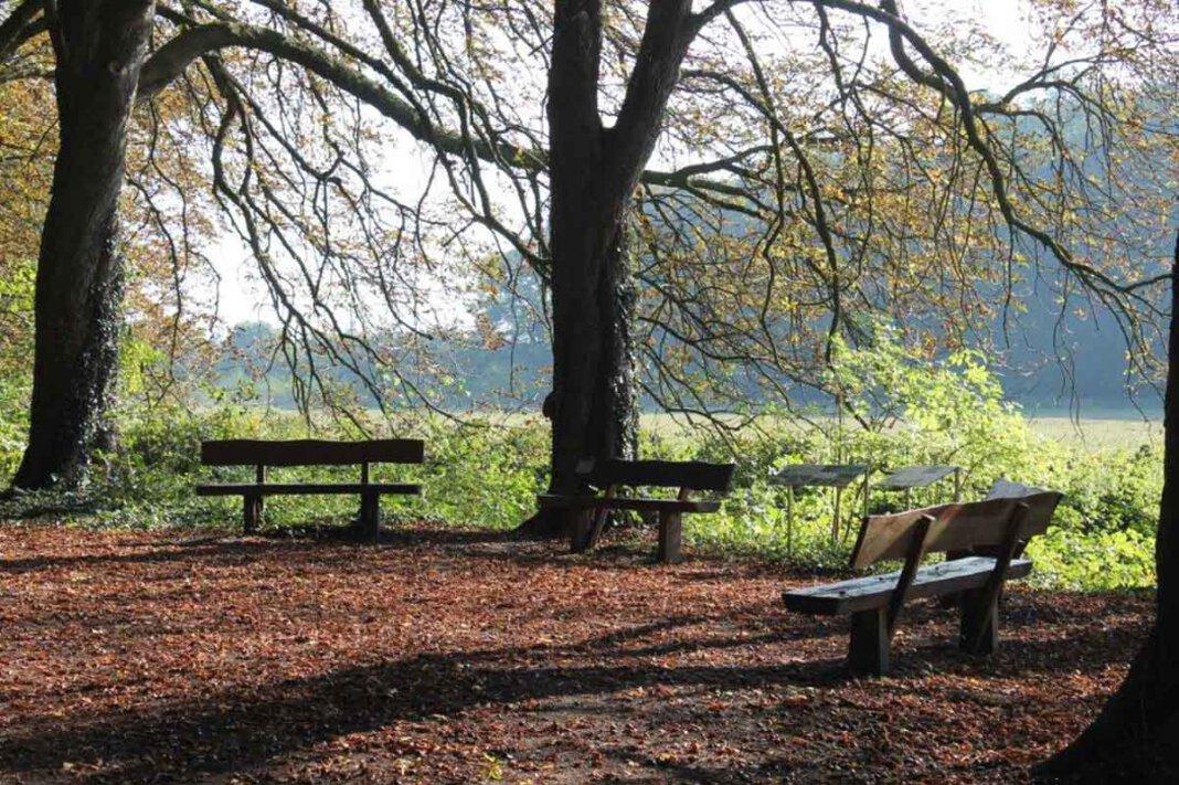 Zu einer Exkursion durch den Hirschpark lädt Melanie Storm ein. Foto: Storm