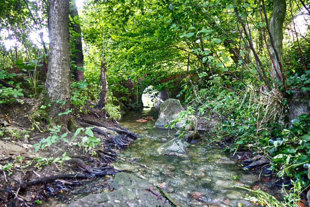 Die Horne ist an manchen Stellen noch ein recht naturnaher Bach. Foto: Steinmüller